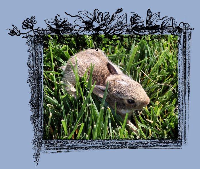 Bunny 2 Frame