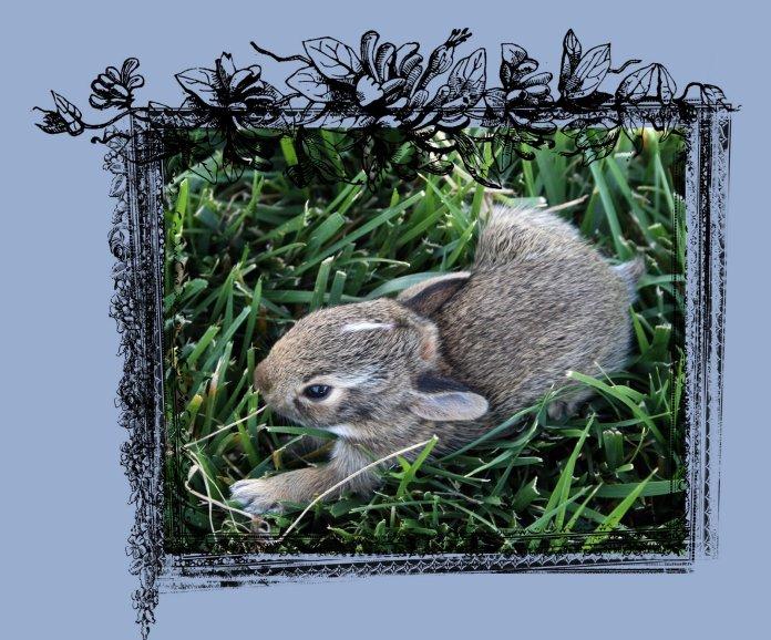 Bunny 1 Frame